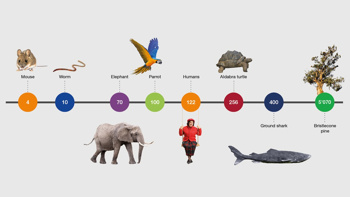 Timeline with the maximum life span of different species. Sources: Fotolia