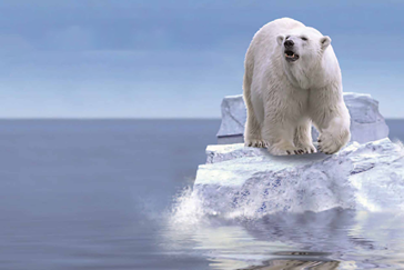 Ice bear on a small ice floe as symbol for CO2 capture