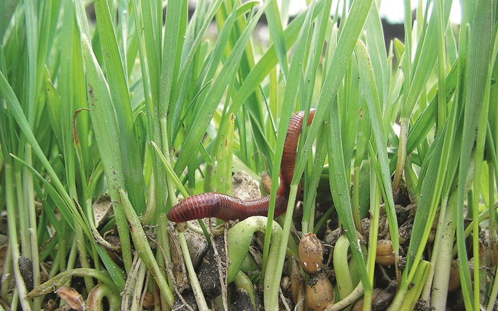 Earthworm in the grass